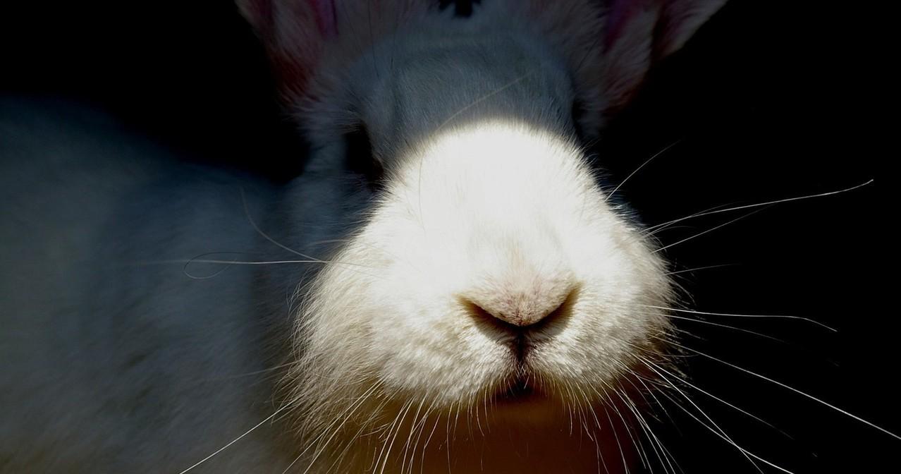 Mieszanka dla królika