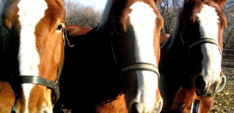 Przyda się również kantar dla konia